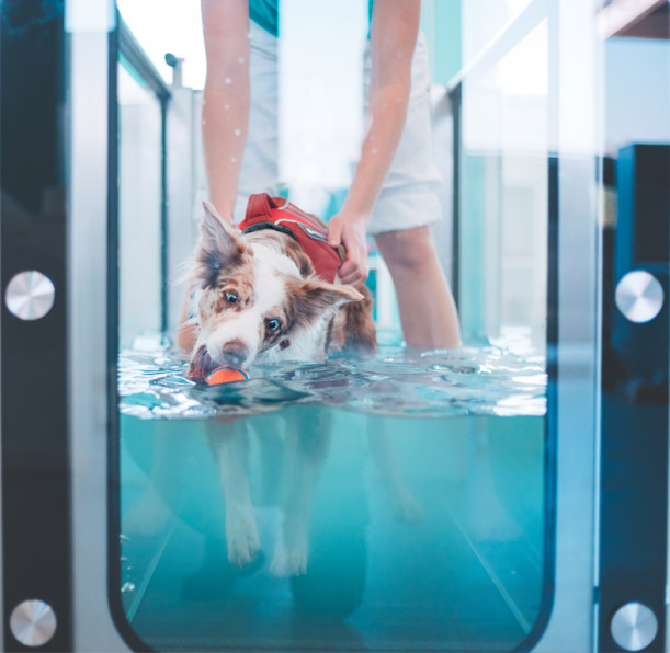 Dog in a treadmill image