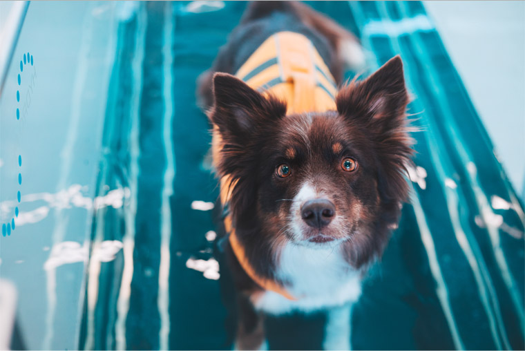 Image of dog in treadmill